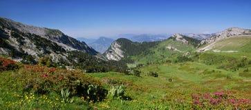 Colinas alpinas: Cordillera chartreuse, azaleas florecientes Fotografía de archivo