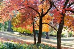 Colinas Autumn Glory Foto de archivo libre de regalías