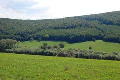 colinas, bosque y cielo azul Fotos de archivo