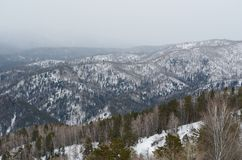 Colinas de Altai Imagen de archivo libre de regalías