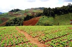 Colinas de cosechas vegettable Imagenes de archivo