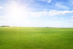 Colinas de la hierba verde bajo el sol del mediodía en cielo azul. imágenes de archivo libres de regalías