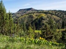 Colinas de la montaña en primavera Fotos de archivo