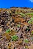 Colinas de Madeira Imágenes de archivo libres de regalías