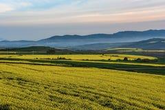 Colinas de niebla en una distancia detrás de campos verdes con las floraciones amarillas fotos de archivo