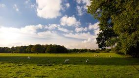 Colinas de Surrey, Inglaterra. Foto de archivo