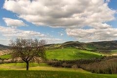 Colinas de Toscana, Italia Fotos de archivo
