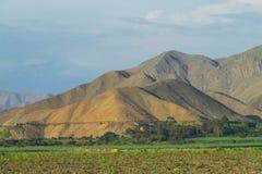 Colinas del desierto y campo verde plano Imagen de archivo