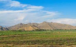Colinas del desierto y campo verde plano Fotografía de archivo libre de regalías
