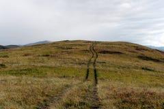 Colinas del otoño de Altai Siberia occidental Rusia fotografía de archivo