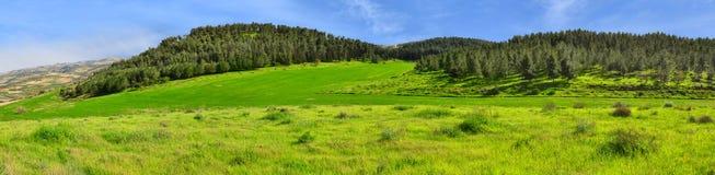 Colinas del panorama, bosque y campos verdes Foto de archivo