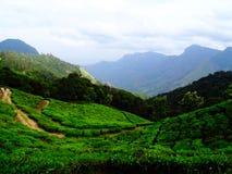 Colinas del té de Munnar Imágenes de archivo libres de regalías