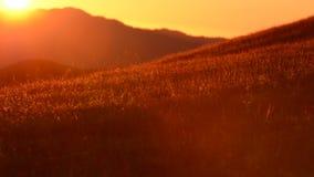 Colinas del verano de California septentrional Flora y fauna del verano metrajes