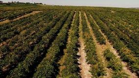 Colinas del viñedo vistas de abejón