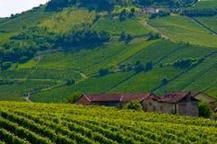 Colinas del vino Fotos de archivo libres de regalías
