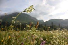 Colinas detrás del herbaje salvaje Fotos de archivo