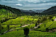Colinas devan kannan de la plantación de té de Munnar imagen de archivo libre de regalías