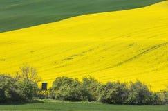 Colinas en campos verdes y amarillos Imagenes de archivo