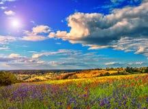 Colinas florecientes del día soleado fantástico en la luz del sol caliente Imagen de archivo