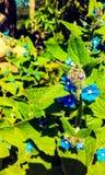 Colinas Londres de la fresa Fotografía de archivo libre de regalías
