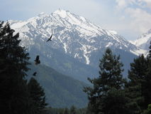 Colinas, Pahalgam, Jammu y Cachemira, la India Imagen de archivo libre de regalías