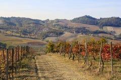 Colinas para la producción de vino italiano foto de archivo