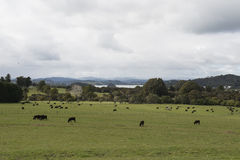 Colinas verdes con el bosque y los prados Foto de archivo