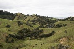 Colinas verdes con el bosque y los prados Fotografía de archivo libre de regalías