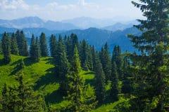Colinas verdes con los árboles y las montañas de pino Fotografía de archivo