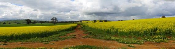 Colinas verdes, cosechas de oro y tierra roja Fotos de archivo libres de regalías