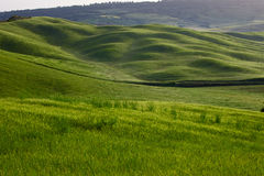 Colinas verdes de Toscana Fotos de archivo