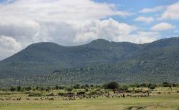 Colinas verdes y ovejas que pastan Foto de archivo
