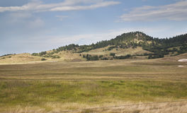 Colinas y árboles de pino en el Black Hills de Dakota del Sur foto de archivo libre de regalías