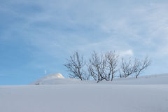 Colinas y árboles Nevado fotografía de archivo libre de regalías