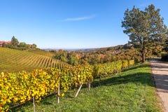Colinas y vineyads de Piamonte Fotografía de archivo
