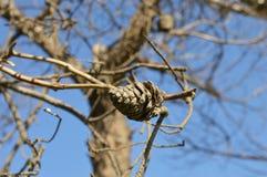 Colisão na árvore Fotografia de Stock Royalty Free