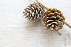Colisões da floresta do Natal Imagem de Stock