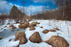 Colisões na floresta Fotografia de Stock