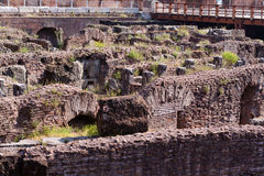 Coliseum. A Coloseum ruins and green grass Royalty Free Stock Photography