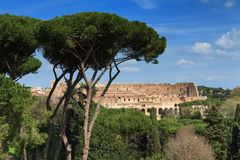 Coliseum as seen from the Palatine hill Stock Photography