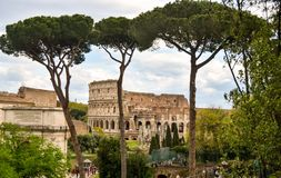 Coliseum Roma view garden. Coliseum of Roma Italy stock photo