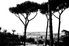 Coliseum, Rome Royalty Free Stock Photos