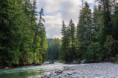 The Cowlitz River. The Colitz River near the La Wis Wis Campground in the state of Washinton Stock Photos