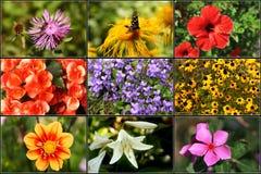 Collage 1 van de bloem - XXL Stock Afbeeldingen