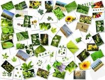 Collage fotografía de archivo libre de regalías