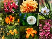 Collage 2 de fleur - XXL photographie stock