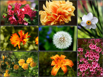 Collage 2 de la flor - XXL Fotografía de archivo