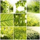 Collage Lizenzfreies Stockfoto