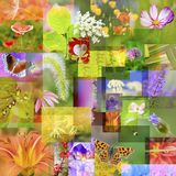 Collage. Colorful collage of florals and leaves Royalty Free Stock Photo