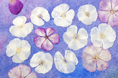 Collage, abstract watercolor background Royalty Free Stock Images